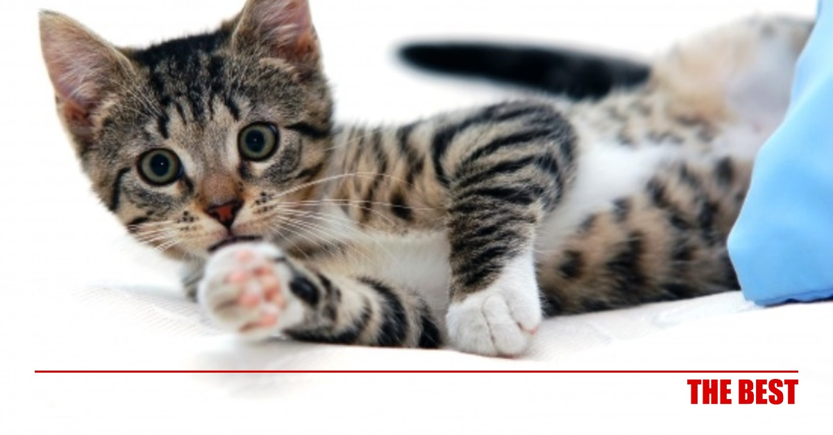 9c1a50b69680 Οι γάτες μπορούν να αναγνωρίσουν το όνομά τους! - Κοινωνία