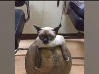 Γάτα σφήνωσε σε... πιθάρι!