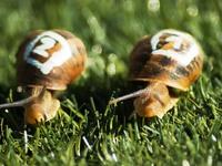Αγώνες ταχύτητας με… σαλιγκάρια