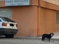 """Σκυλίτσα """"Χάτσικο"""" στο Αίγιο: Περιμένει ακόμα το αφεντικό της που πέθανε"""