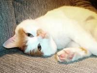 Ο... Σύρος γάτος πρόσφυγας της Ειδομένης ζει πλέον ξέγνοιαστος στη Σουηδία