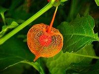 Τα φυτά «ουρλιάζουν» όταν στρεσάρονται