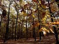 Στα δικαστήρια της Πάτρας για το δάσος της Φολόης! Ο παράδεισος που έγινε χωματερή