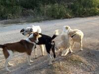 Καταγγελία στο thebest.gr: Σκύλος έχει α...