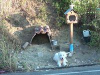 Δυτική Ελλάδα: Σκύλος βρήκε στέγη δίπλα στο εικόνισμα του αφεντικού του