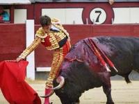 Σοκ με ταύρο που «ξεκοίλιασε» ταυρομάχο - ΒΙΝΤΕΟ