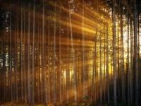 Αξιοποιείται το δάσος της Ζαρούχλας στο Αίγιο! Τι αλλάζει