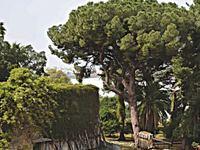"""Το διατηρητέο """"μυστικό"""" σε έναν κήπο με αιωνόβια δένδρα πίσω από το Αρχαιολογικό Μουσείο της Πάτρας"""