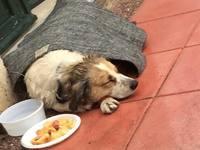 Ζητείται βοήθεια για τραυματισμένο σκύλο - Τον εντόπισαν στο προαύλιο της ΔΕΥΑΠ