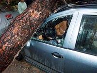 Έπεσε δέντρο στο αμάξι της και παίρνει αποζημίωση από τον Δήμο Πατρέων