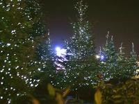 Χριστουγεννιάτικο… δάσος με 95 έλατα και 15 χιλιόμετρα φωτάκια στο Αγρίνιο!