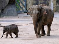 Αυτό το ελεφαντάκι ψάχνει για όνομα