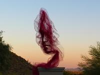 Γυναίκα από τούλι στην έρημο Σονόρα