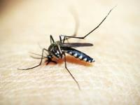 49 κρούσματα ιού του Δυτικού Νείλου στην Ελλάδα - Ανήσυχοι οι γιατροί