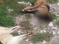 Φρίκη! Νεκρά 50 σκυλιά από φόλες
