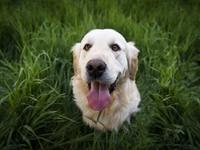 Δηλητηρίασε τρεις σκύλους στον Άραξο