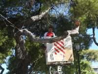 Μετατίθεται για την άλλη εβδομάδα λόγω απεργίας το πρόγραμμα κλαδέματος δένδρων στην Πάτρα