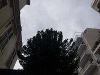 Το νου σας ψηλά μη σας έρθει το δένδρο στο κεφάλι!