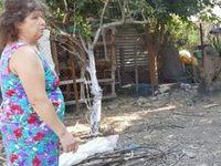 Δυτική Ελλάδα: Πέταξε φόλες σε αυλή με παιδιά – Θανάτωσε δύο σκυλιά