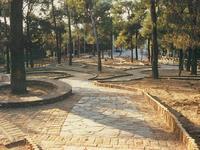 Το Δασύλλιο της Πάτρας που είναι αντίστοιχο της Τεργέστης, ήταν οικισμός και συγχωνεύθηκε με την πόλη μόλις το 1951!