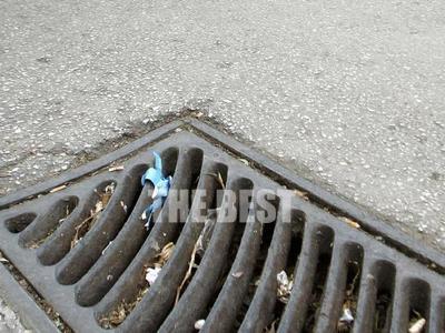 Ο κορωνοϊός έβγαλε τα ποντίκια στους δρόμους των μεγαλουπόλεων - Μαρτυρίες και στην Πάτρα