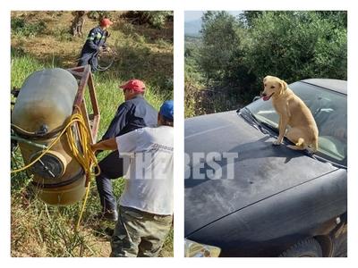 Μαζαράκι Αχαϊας: Ο σκύλος του τραυματία ...