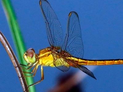 Τα έντομα μειώνονται κι αυτό απειλεί με....
