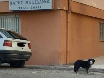 """Σκυλίτσα """"Χάτσικο"""" στο Αίγιο: ..."""