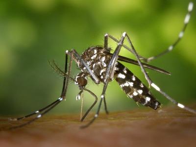 Δέκα νεκροί και 96 συνολικά τα κρούσματα λοίμωξης από τον ιό του Δυτικού Νείλου