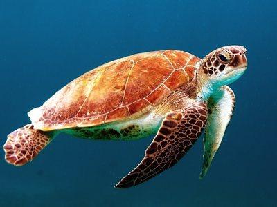 Κινδύνεψε στη θάλασσα για να σώσει μία χελώνα