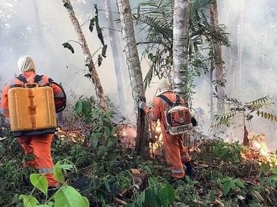 Ο Αμαζόνιος εκπέμπει SOS - Στις φλόγες ο πνεύμονας που παράγει το 20% του οξυγόνου της γης