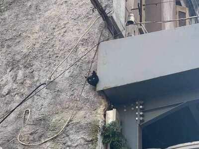 Πάτρα: Η Πυροσβεστική έσωσε γατάκι που ε...