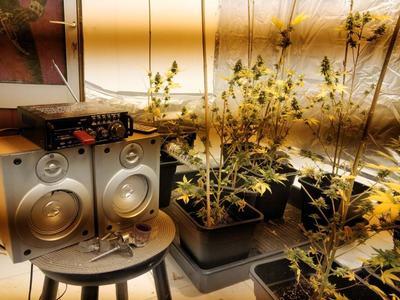 Πατρινός καλλιεργούσε υδροπονική κάνναβη στο υπόγειο του σπιτιού του! ΔΕΙΤΕ ΦΩΤΟ