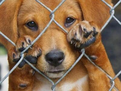 «Κολαστήριο» σκύλων στο Αγρίνιο - Μετατρ...