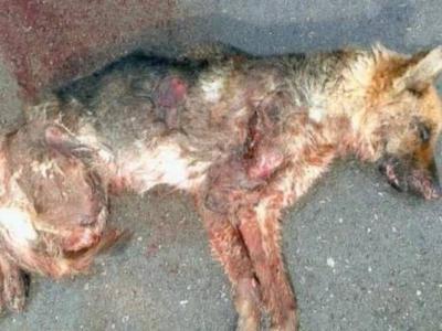 Βασάνισε σκύλο μέχρι θανάτου