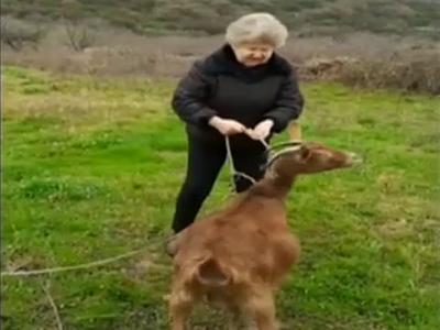 """Γιαγιά βγάζει την κατσίκα της βόλτα και τα """"ψέλνει"""" στην κυβέρνηση!"""