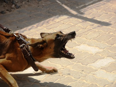 Αγέλη σκύλων επιτέθηκε σε περαστικούς - Τέσσερις τραυματίες