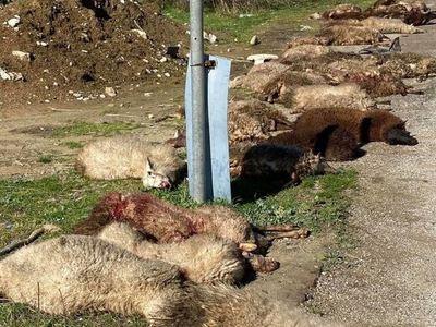 Σοκαριστικό τροχαίο στο Μεσολόγγι- Αγροτικό έπεσε πάνω σε πρόβατα!