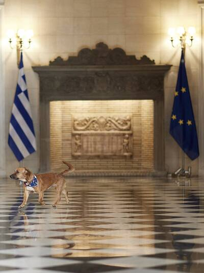 Ο Πίνατ, το χαριτωμένο σκυλάκι που υιοθέτησε ο K. Μητσοτάκης από καταφύγιο, βολτάρει στο Μαξίμου (photos)
