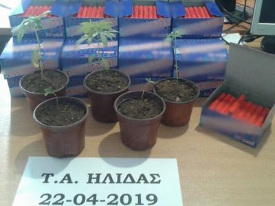 Ηλεία: Περισσότερες από 2.000 κροτίδες και πέντε φυτά κάνναβης