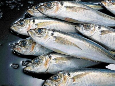 """Τα ψάρια και η φυτοφαγία """"ασπίδα&qu..."""