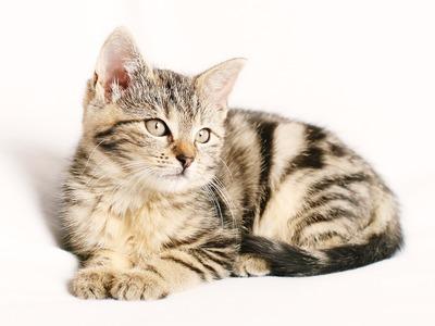Βόνιτσα: Έριξαν φόλα σε αδέσποτη γάτα