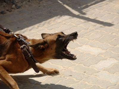 Σκύλος δάγκωσε και τραυμάτισε 12χρονο Πατρινό στο χέρι