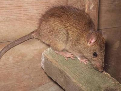 Ναύπακτος: Παρέα με τα ποντίκια στο Γρίμποβο