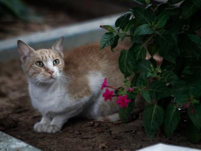 Πόσες είναι οι γάτες στην Ελλάδα;