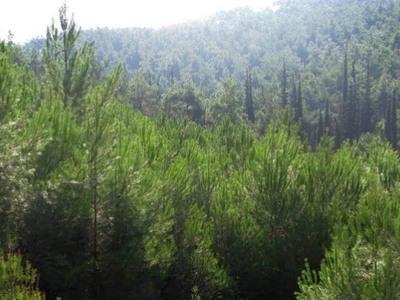 Έτσι θα επηρρεάσει η κλιματική αλλαγή τα δάση και τη γεωργία στη Δυτική Ελλάδα