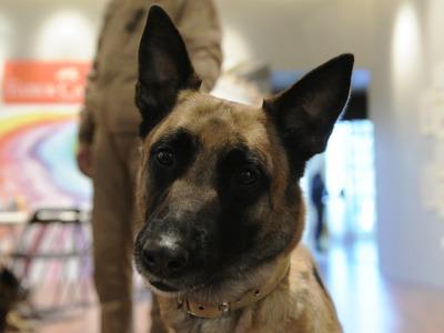 Ο σκύλος της Αστυνομίας ξετρύπωσε μισό κιλό κόκας