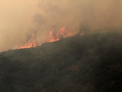 Φωτιά καίει αγροτοδασική έκταση στην Ηλεία -Μεγάλο το πύρινο μέτωπο