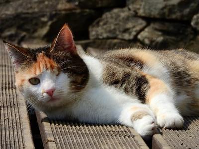 Φρίκη στη Φολέγανδρο - Κυρώσεις για τους μαθητές που σκότωσαν με κλωτσιές τυφλή γάτα