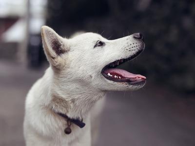 Πάτρα: Είχε τον σκύλο στην ταράτσα και συνελήφθη